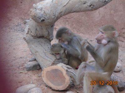 refuge decan babouins