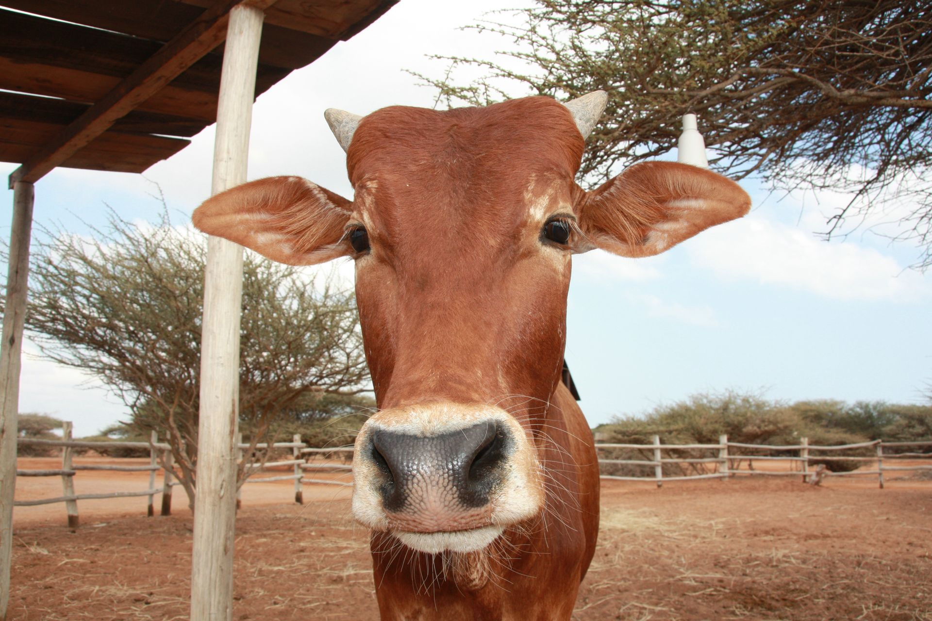 zebu anon decan refuge