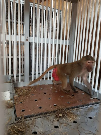 refuge decan babouin