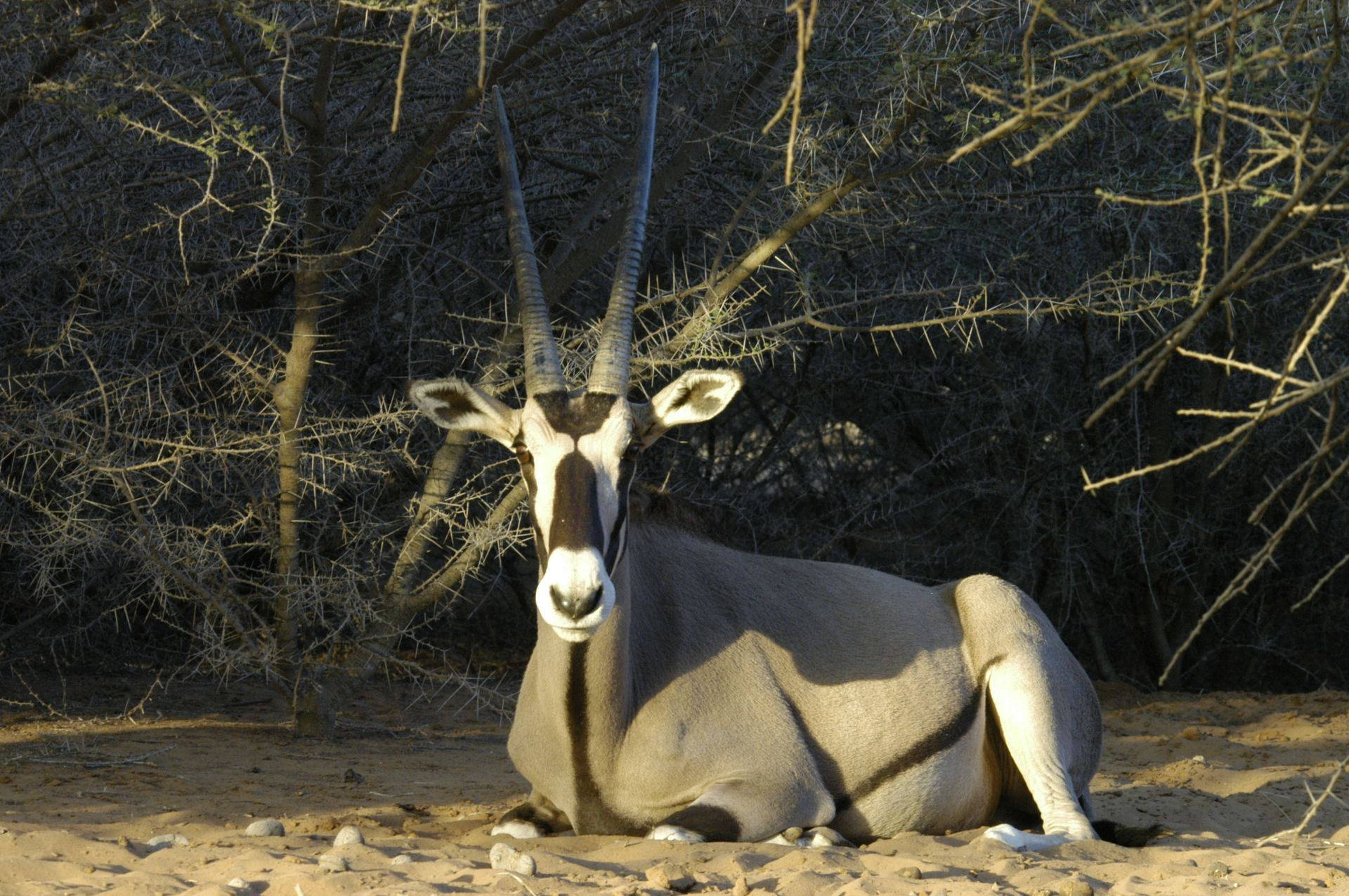 decan refuge oryx