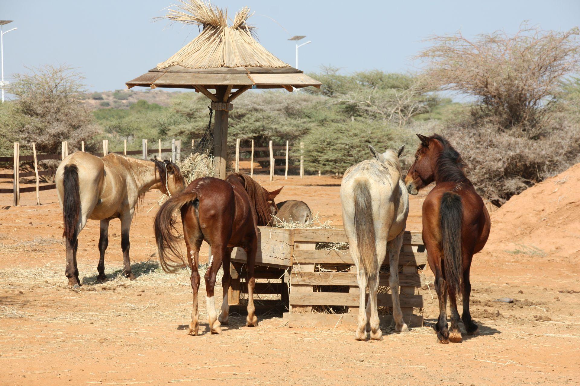 chevaux refuge decan