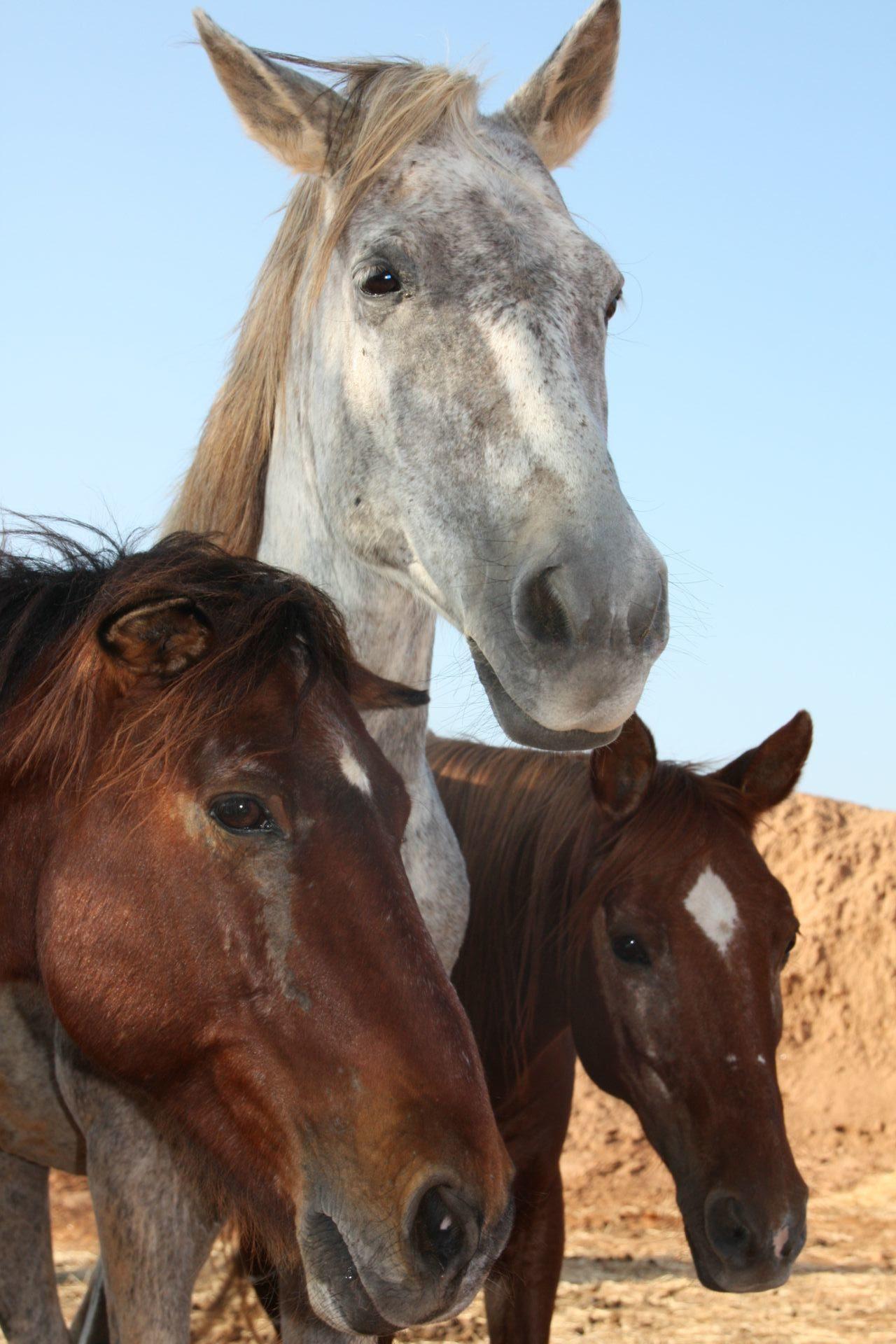 refuge decan chevaux