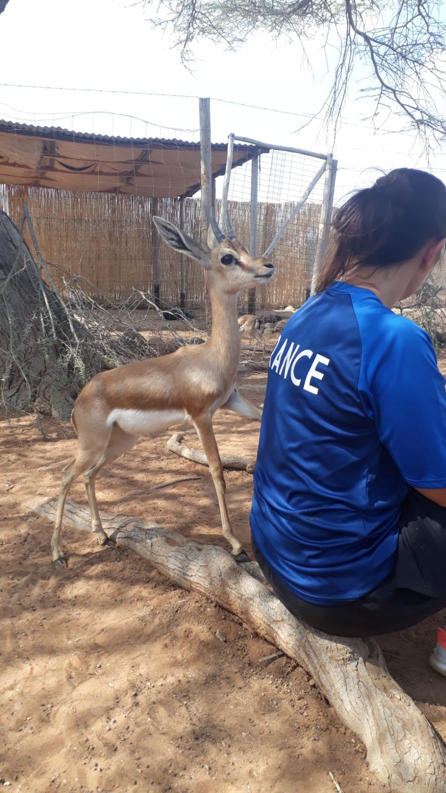 decan refuge gazelle